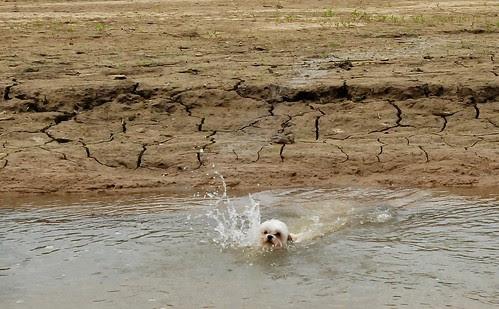 My little swimmer