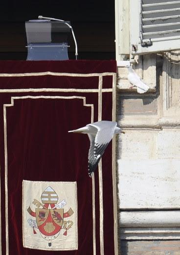 Il gabbiano all'attacco della colomba del Papa
