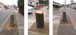 tree stumps in left to right: Wensleydale Avenue, Clayhall Avenue and Chalgrove Crescent