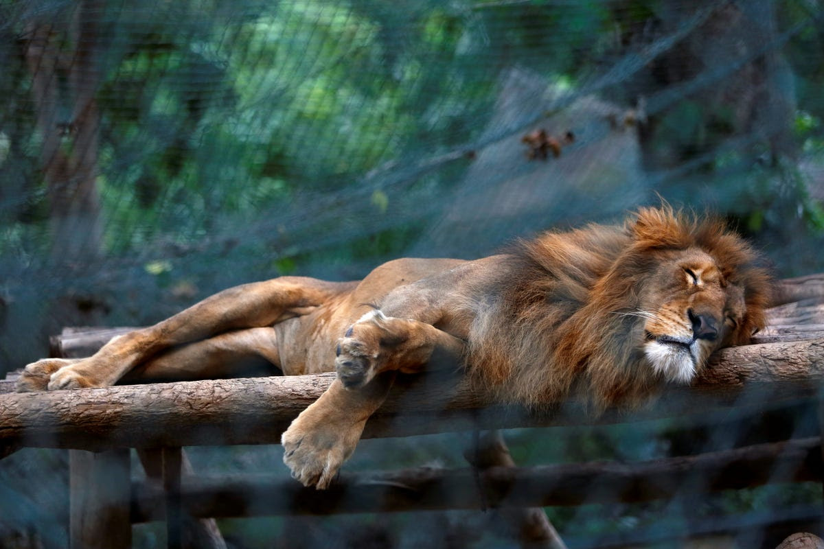 Fifty animals have starved to death within the last six months at Caricuao zoo, one of Venezuela's main zoos.