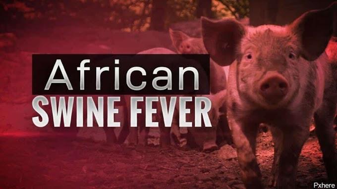 Papar, Kota Kinabalu, Tenom kawasan baharu jangkitan demam babi Afrika