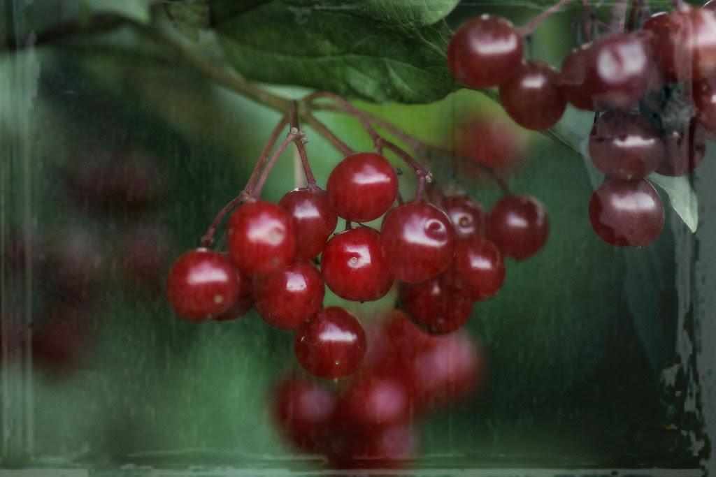 rainy day berries