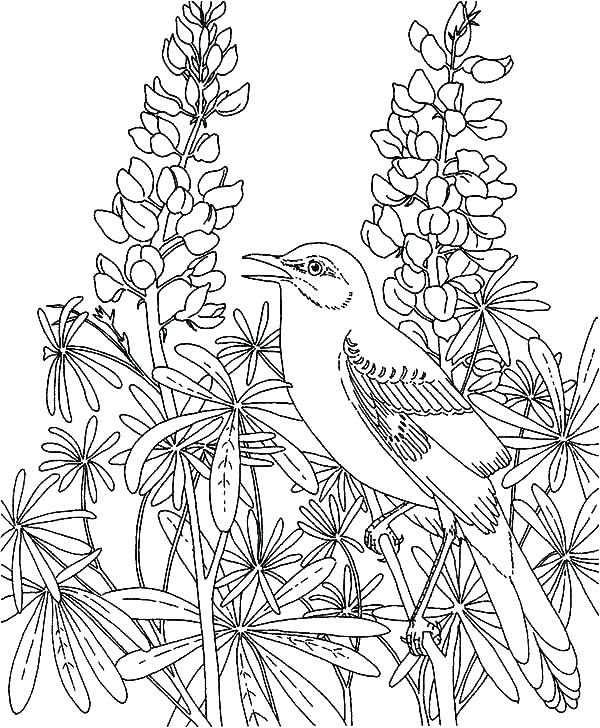 Fairy Garden Coloring Pages at GetColorings.com | Free ...
