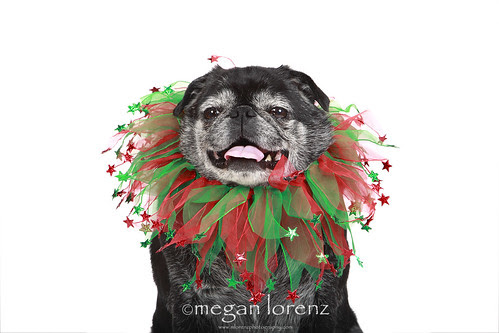 Festive by Megan Lorenz