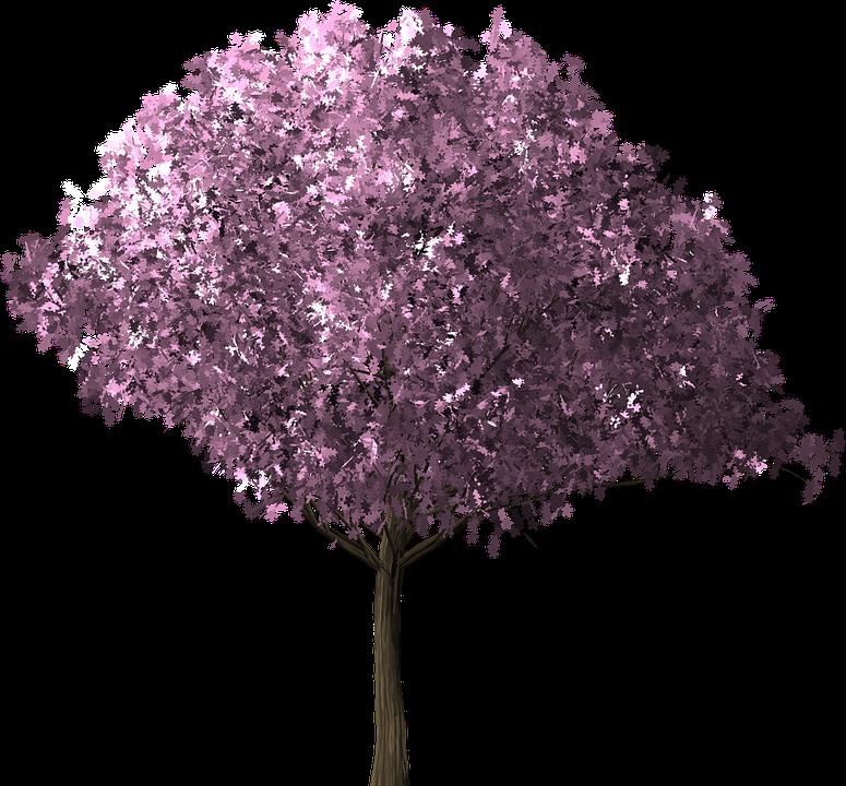 Cherry Blossom Tree PNG HD Transparent Cherry Blossom Tree ...