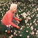 Montrose Daffodils (re-pro)