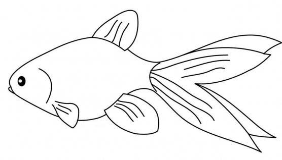 Jenis Ikan Gambar Hias Bermotif Hewan Contoh Gambar Dekoratif Ikan Gambar Dekoratif
