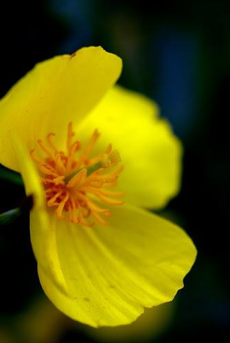 Pentax SMC-A 50mm f/2.8 Macro 1:2 Flower Test Shot
