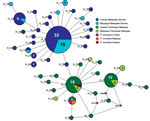 Thumbnail of Median-joining networks of Plasmodium knowlesi cytochrome oxidase subunit I haplotypes from Malaysia. The genealogical haplotype network shows the relationships among the 44 haplotypes present in the 138 sequences obtained from human and macaque samples from Peninsular Malaysia and Malaysian Borneo. Each distinct haplotype has been designated a number (H_n). Circle sizes represents the frequencies of the corresponding haplotype (the number is indicated for those that were observed m