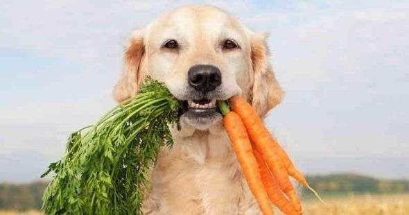 ¿Cómo hacer que un perro sea feliz?