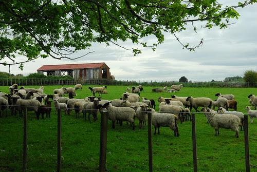 Sam_farm_NZ 021