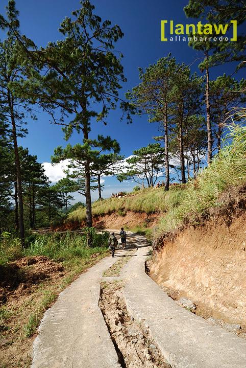 Salacsac Pine Forest 9
