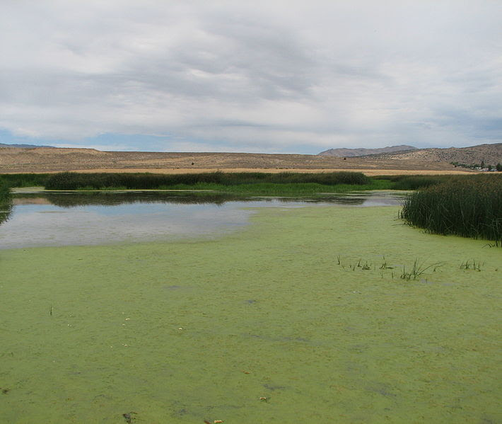 File:Swan Lake Nature Study Area  wetlands.jpg