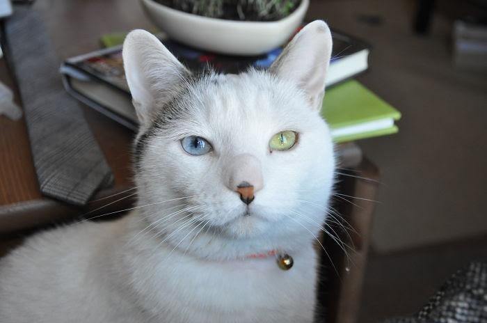 80 животных с красивейшими разноцветными глазами глаза, животные, цвет