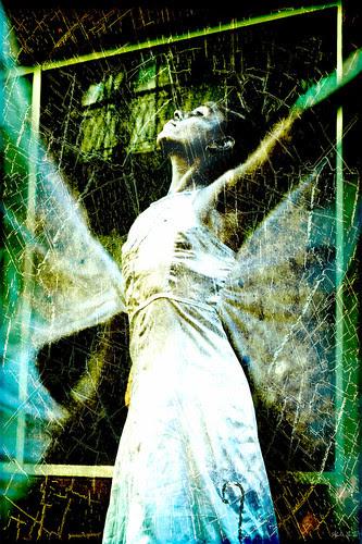 wings by escael
