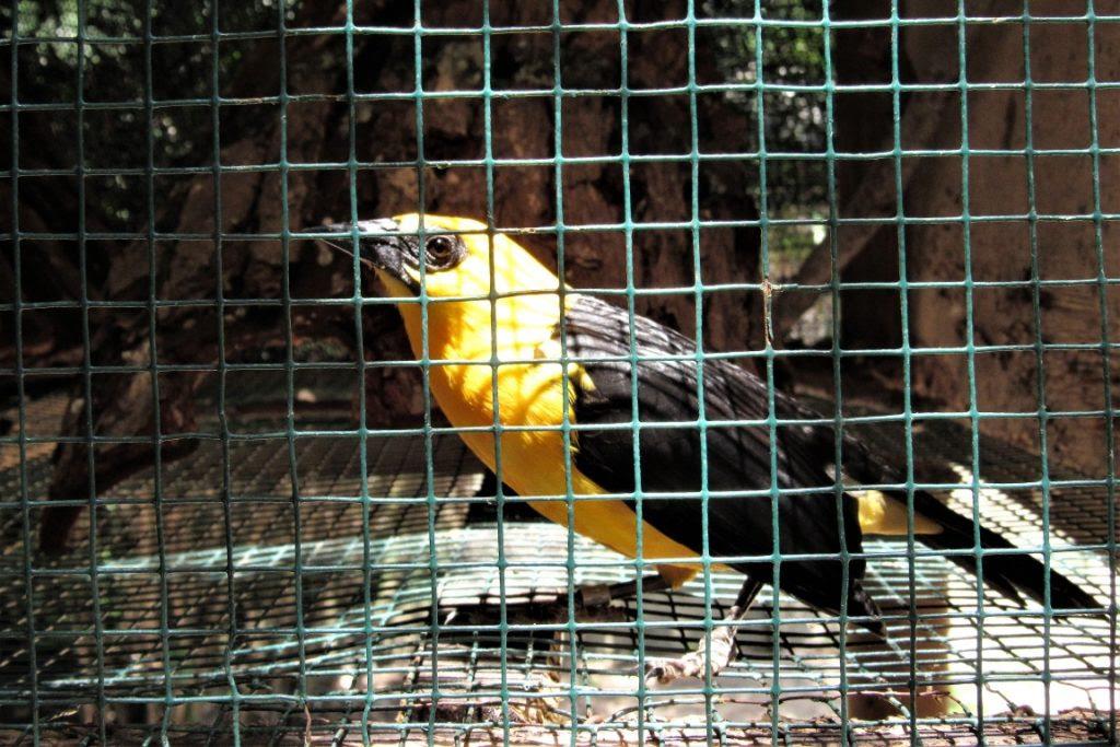 Quarentena para a recuperação de aves. Foto: Fabíola Ortiz.