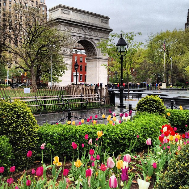 Rainy sky, bright tulips