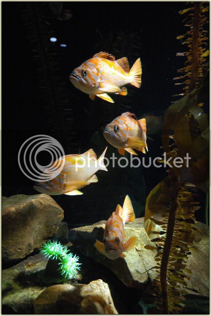 Fishies 10