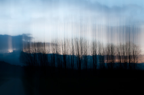 Trees 20591