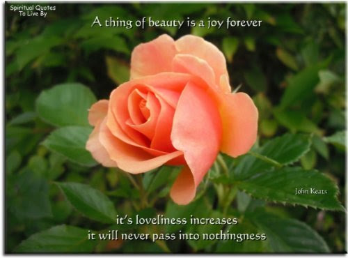 Images Of Beautiful Roses With Quotes 1097 Loadtve