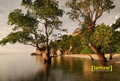 Tinuto Mature Mangroves