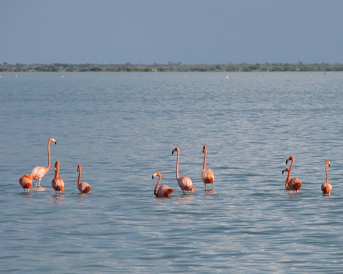 Flamingos! #3 (Inagua: Day 2)