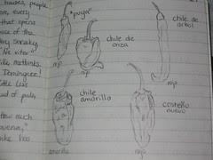 Chiles de Oaxaca