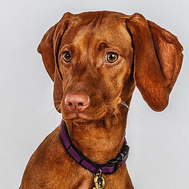 Retratos de cães cheios de personalidade 08
