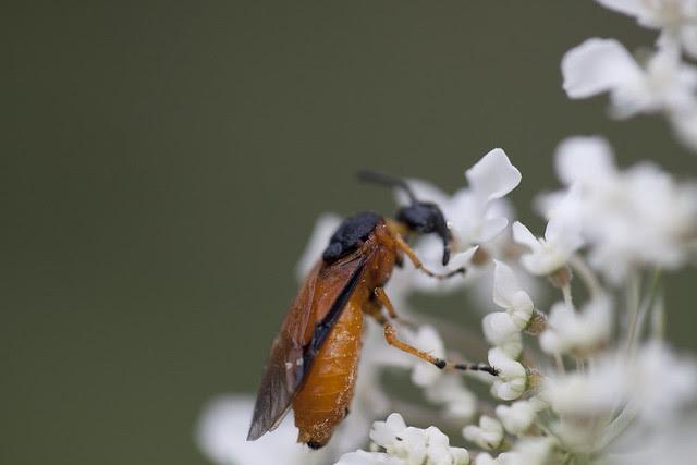 QAL bug