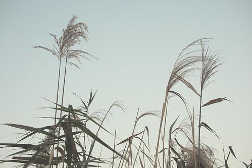 PB010350 2012年11月1日アートフィルター(デイドリーム