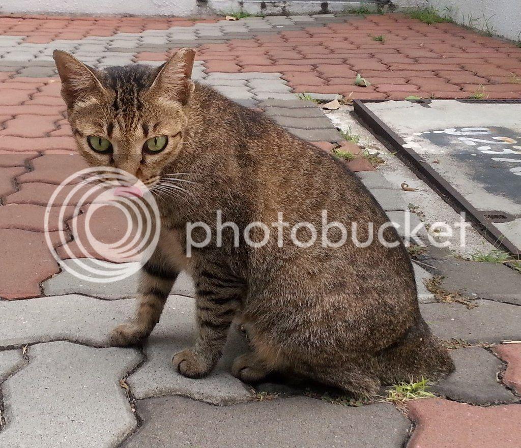 photo CatSimsP08.jpg