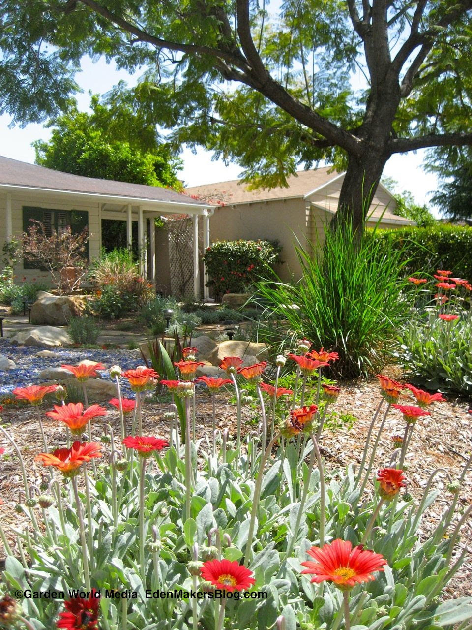 No-Lawn Yard Designs | Eden Makers Blog by Shirley Bovshow