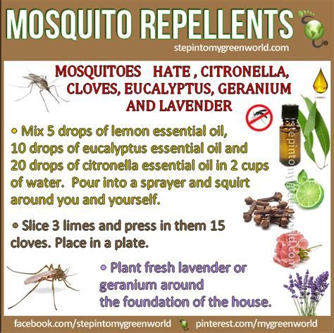 Best all natural mosquito spray repellent   Step Into My Green World   STEPin2