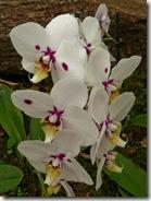 09 orhideja