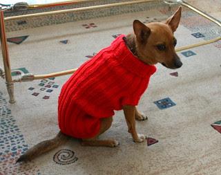 Finished dog sweater