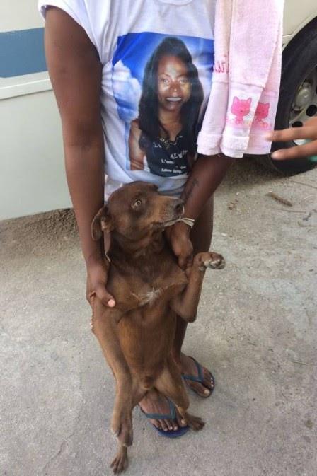 Cachorro de estimação de mulher morta após levar coronhada de PM acompanha enterro na Zona Oeste
