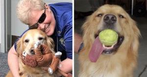 Mujer invidente rompe en llanto al ver a su perro guía por primera vez en 8 años