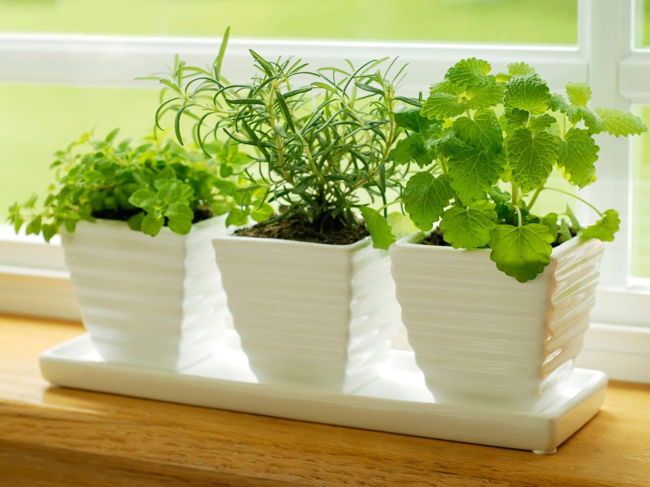 iStock-4787386_herbs-on-kitchen-windowsi