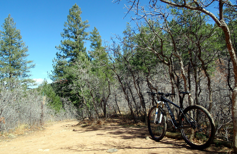After sharing for nearly a mile, the Colorado Trail, and Trail 800, part ways here.