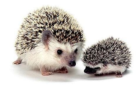 Top 10 Small Pets That Could Be Right for Your Kids