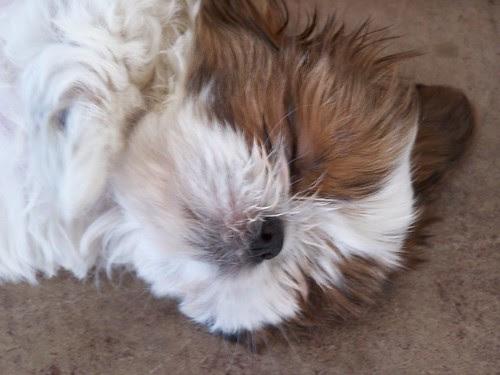 wonton sleeps