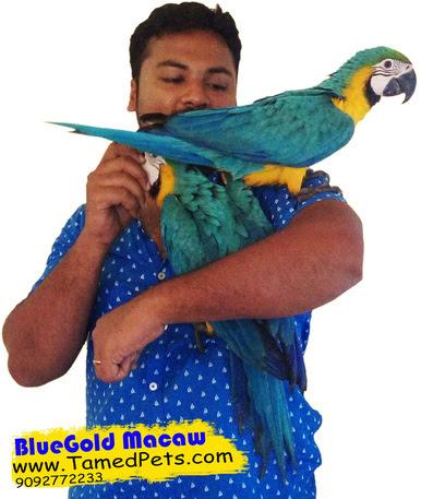 List Of Pet Birds In India Pet S Gallery