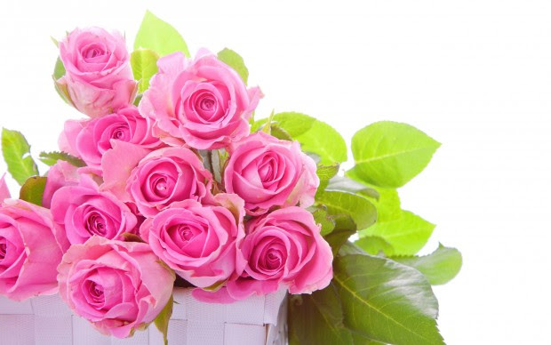 Pink rose flower images pictures HD wallpapers.