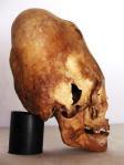 Un cráneo alongado de un dios alienígeno