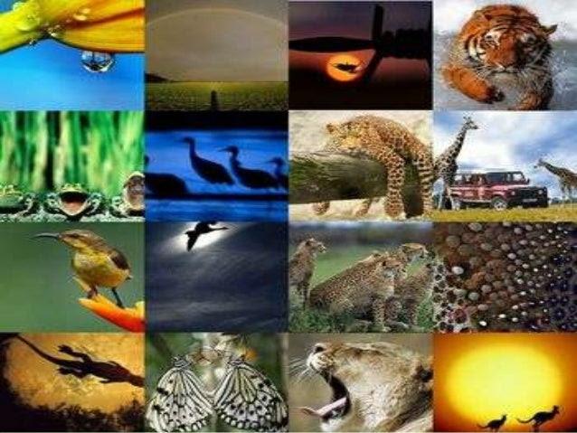 Acogerá Ecuador encuentro sobre fauna silvestre en América Latina