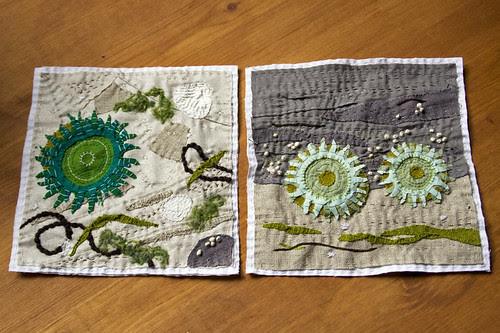 sea anemones, two ways