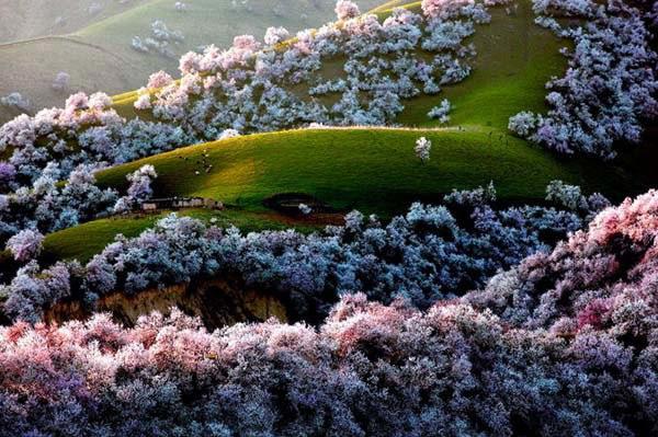 perierga.gr - Τα πιο ασυνήθιστα δάση του πλανήτη!
