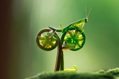 Louva-a-deus de bike?