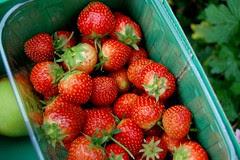 fruit picking 2