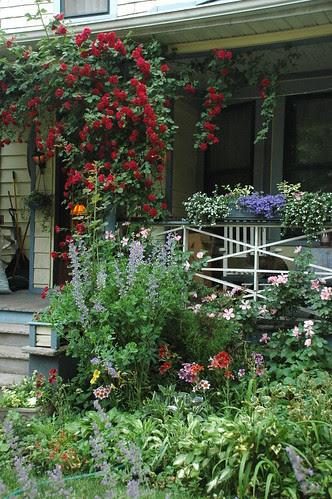Front Garden, 320 Stratford Road
